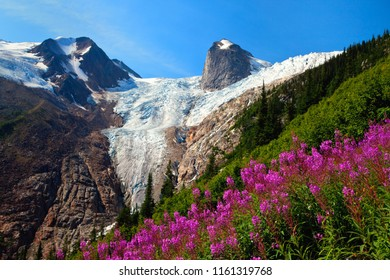 Fireweed in Bugaboo Provincial Park in British Columbia, Canada