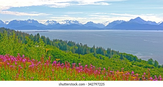 Fireweed and Mountains by Kachemak Bay near Homer, Alaska