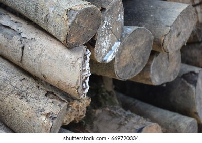 Firewood for fire