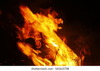 Firewood flames, pine nose leaves,strong flames, flickering flames, flame background, At Mitsuan, Hanyu City, Saitama, Japan,