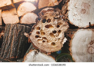 Firewood in holes from beetles.