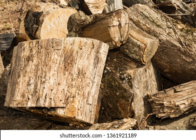 Firewood infested with Emerald Ash boring beetles