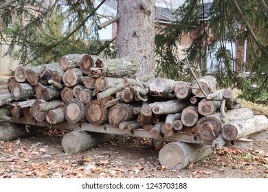 firewood and logs for winter