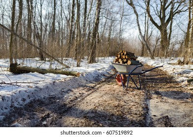Firewood on a cart on a forest road