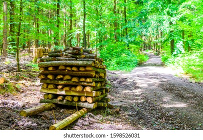 Firewood on forest trail view