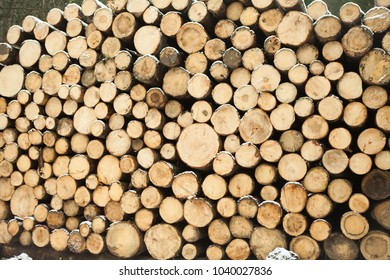 Firewood ready for fire.This wood can be manufactured furniture. These are dry firs.