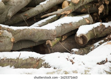 Firewood Stacked in the Snow