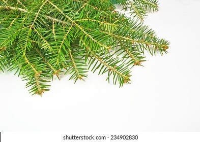 firs branches in white xmas background - space to put your text