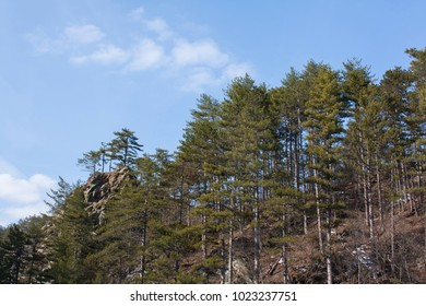 firs in the mountains in piedmont