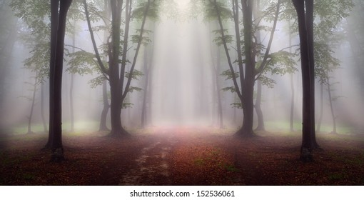 First autumn days into a foggy forest