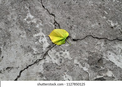The first autumn yellow leaf lies at the fork in the road. A leaf of a tree lies on the cracked asphalt in autumn.