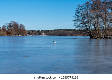 First day spring on lake Malaren near Sigtuna, Sweden. Bright blue sky. Ice water.