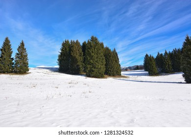 the first days of Spring in the high mountains, on the Forest of the Cansiglio, in Belluno, Italy