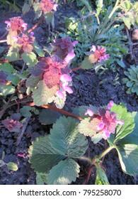 the first flowers in the spring garden of Ukraine