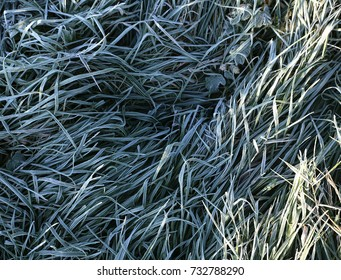 first frost on the leaves and grass photo for micro-stock