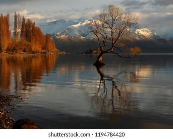 First Light on That Tree, Wanaka, New Zealand