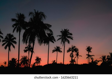The first light of today With the shadow of the coconut tree Which is very beautiful