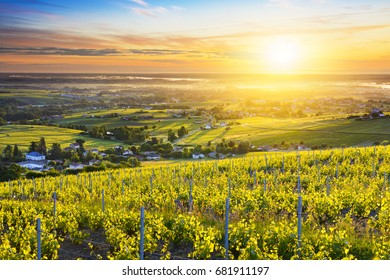 First lights of sunrise over vineyards and landscape of Beaujolais in France