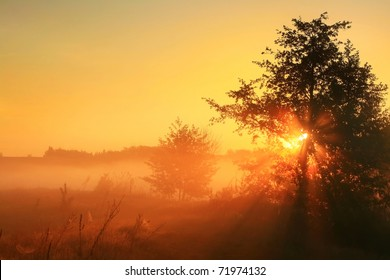 The first rays of the rising sun pass through the fog