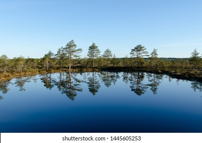 The first rays of the sun in the early morning. Summer landscape of Konnu-Suursoo Bog in Korvemaa, Estonia.