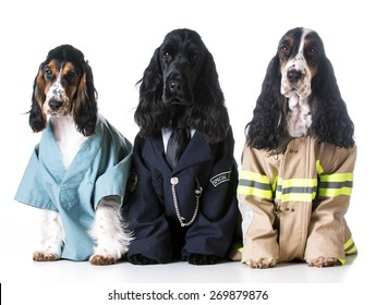 first responders - english cocker spaniels dressed up like a doctor, police officer and a fire fighter on white background