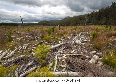And I first saw the trees, the trees  which you seem to be chopping as fast as you please (The Lorax, Dr. Seuss).â?¨Vast plain near Maydena that has been hit by the logging industry.
