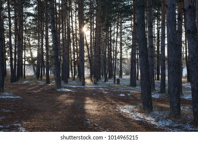 First snow in the autumn forest illuminated by the sun