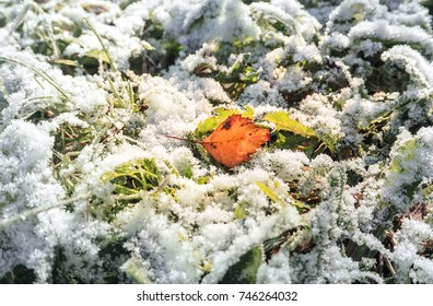 First snow. Background with last year's leaves, frost and sun.