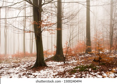 The first snow in a foggy forest glowing with the colors of autumn.