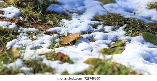 the first snow on the green grass, autumn