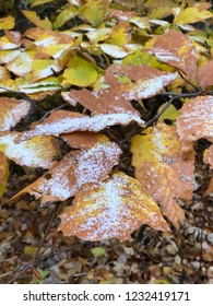 First snow on a orange leaves
