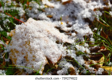first snow on yellow leaves and green grass,winter is coming