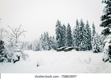 The first snow of the year in the italian alps