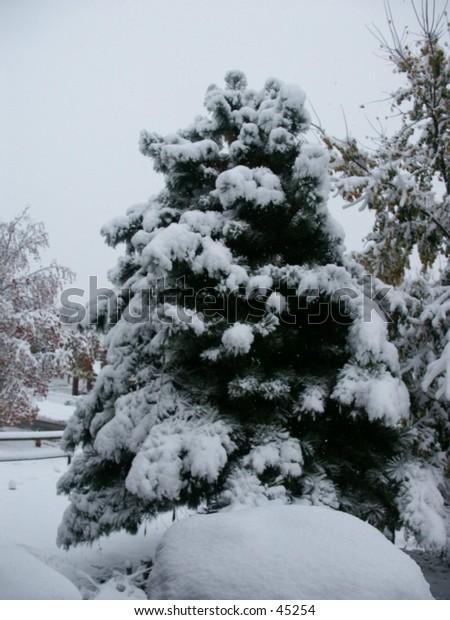 First snowfall in Kansas City, MO.