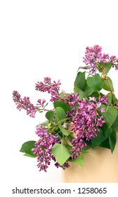 First spring bouquet of lilacs