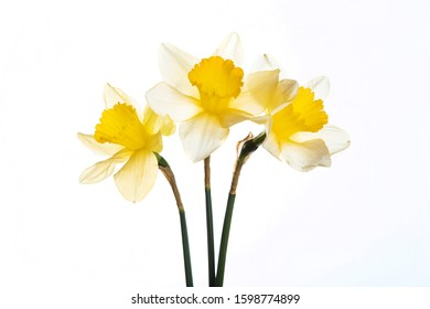 First spring flowers isolated on white background