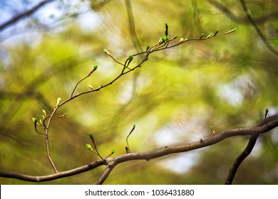The first spring and old gentle leaves, buds and branches macro background