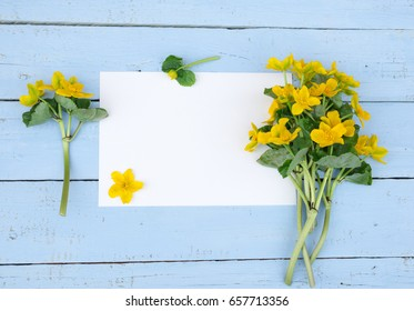 First spring Yellow Flowers. Wildflowers with blank paper on blue wooden background. Vintage Floral mock up with wild flowers. Caltha palustris, or Kingcup or Marsh Marigold. Copy space