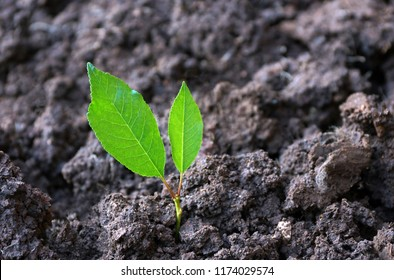 the first sprout from the ground two green leaves. the concept of the business the first shoots. the thirst for life of all living things to survive in difficult conditions, on rough hard ground.