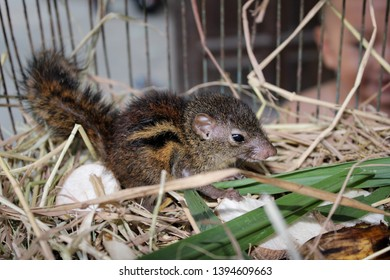 The first squirrel was raised in a cage. At a house