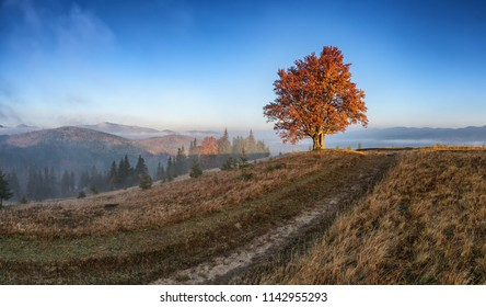 The first sun rays on lonely beech tree in autumn landscape with morning fog on hills.