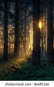 First sunlight in a dark forest