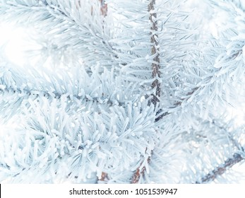 fir-tree branches covered with frost