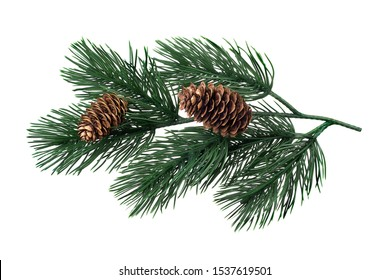 fir-tree branches on a white background isolate