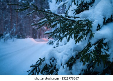 Fir-tree on a roadside late evening in the forest in the winter