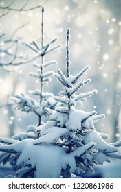 The fir-tree in the winter, is filled up with snow.