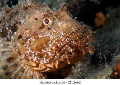 Similar Images, Stock Photos & Vectors of Brittle Seastar