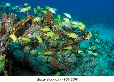 Fish aggregation on a coral tropical reef.