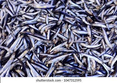 Fish anchovy background on ice in fishermen market store shop. Seafood european pile of anchovy pattern on ice. Black sea anchovy fish placed in family Engraulidae. Heap of small little fish for sale