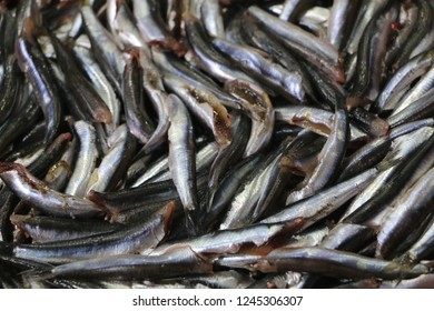 Fish anchovy background on ice in fishermen market store shop. Seafood european pile of anchovy pattern on ice. Black sea anchovies are placed in family Engraulidae. Heap of small little fish for sale